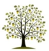 9123417-oak-tree-on-white-background